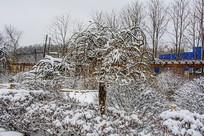 一棵披着雪挂的树与树丛林花园
