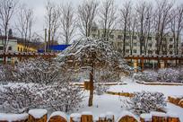 一棵披着雪挂的树与树丛树林