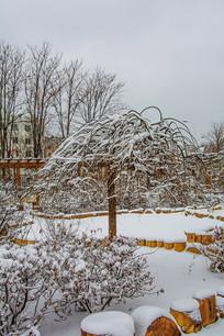 一棵披着雪挂的树与树丛雪地
