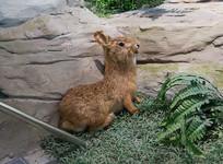 三峡库区野生动物资源野兔标本