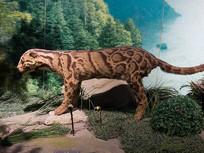 三峡库区野生动物资源云豹标本