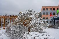 一棵树枝挂着雪挂的树与教学楼