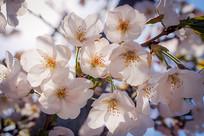 春天花朵摄影