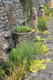 中式古典墙边的小草植物花卉