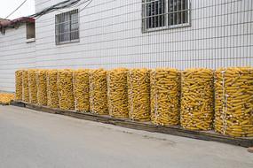 农作物之苞米