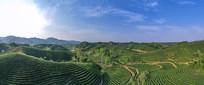 茶田茶山宽幅大图