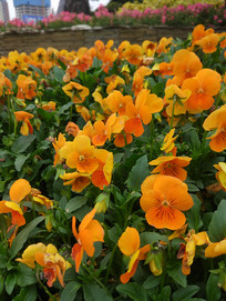 一束束花瓣