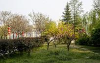 春天的公园