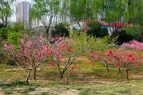 花开的公园