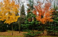 秋天公园一角