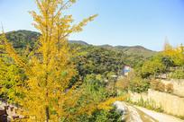 秋天的九如山