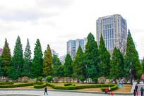 沈阳中山公园广场松树与建筑