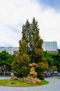 沈阳中山公园广场松树与假山石