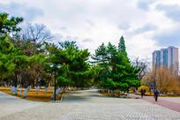 沈阳中山公园广场小路与松树