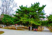 沈阳中山公园广场小路与松树林