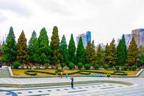 沈阳中山公园广场一排松树