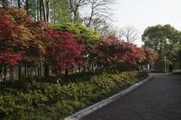 公园小树林