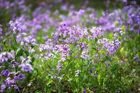 一片小野花