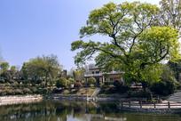 春天里的古树池塘别墅