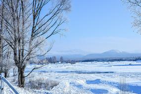 林区冬季风光