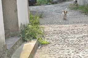 小狗石子路