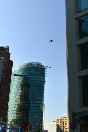 德国柏林城市高楼和飞鸟