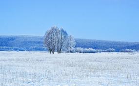 冬季小树林