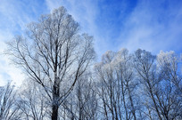 冬天树林风光