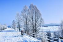 冬天小树林