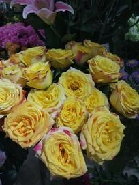 一盆玫瑰花