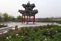 菏泽曹州牡丹园凉亭