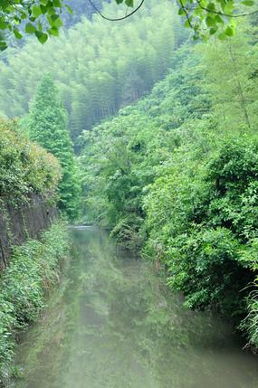 小溪和树木