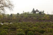 曹州牡丹园种植基地