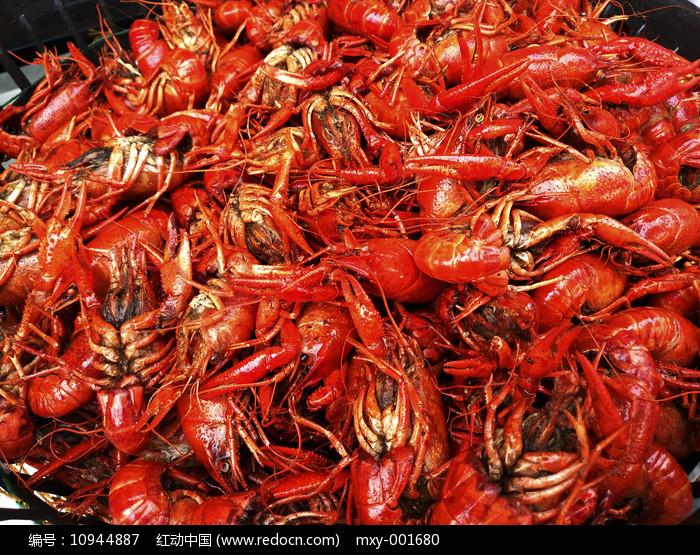 龙虾拍摄图图片