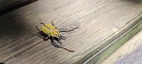 阳光下的小昆虫