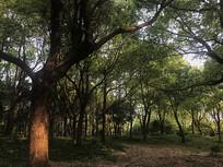 茂密的小树林