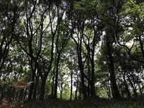 仰拍小树林