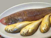 餐厅生食材-野生海产品