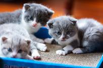 三只小奶猫-大宝二宝三宝