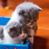 小奶猫-二宝三宝
