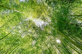 仰拍美丽竹林