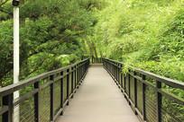 树林里的步行桥
