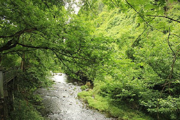 溪水风景一角