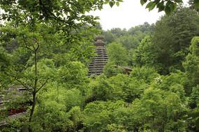 茂密森林里的塔楼