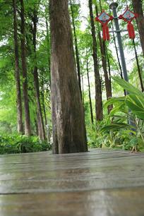 一棵树背景