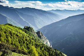 蓝天白云下的树林
