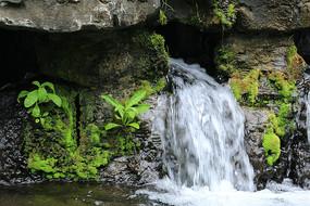 绿植和小瀑布