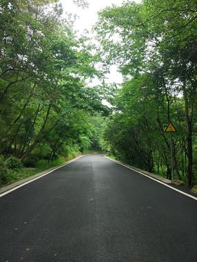 笔直的森林公路