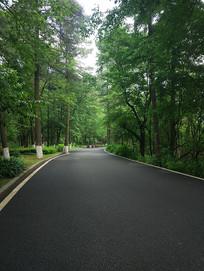 实拍森林公路