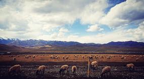 四月的桑科草原